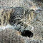Cute Norma Kitty Jean