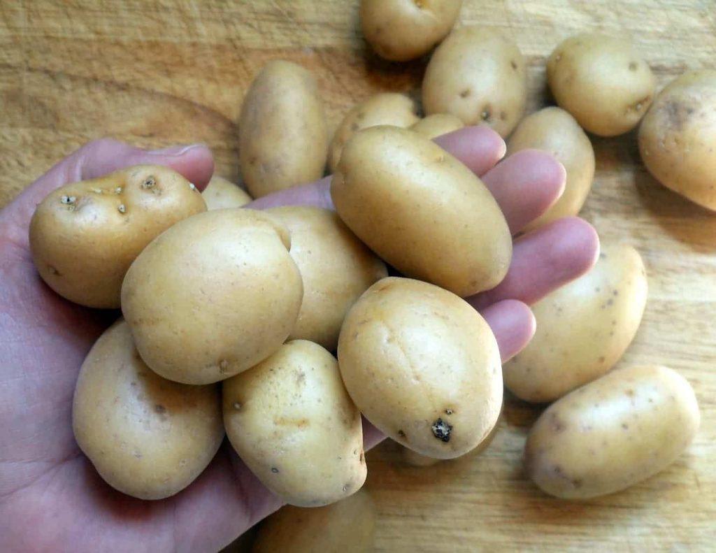 Baby Dutch Yellow Potatoes