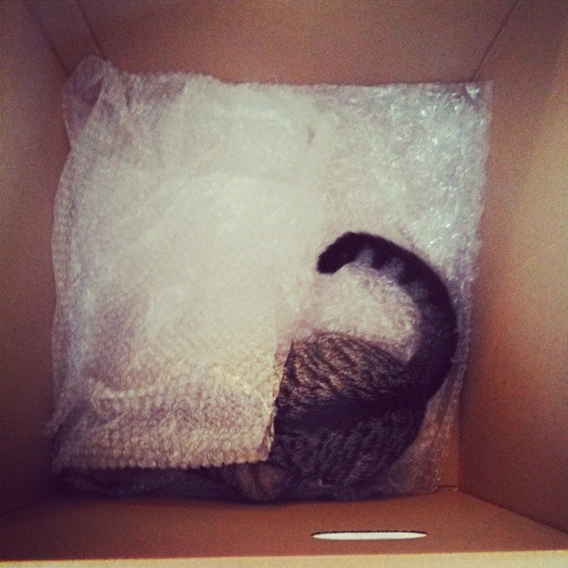 Packing with Cats on www.sugardishme.com