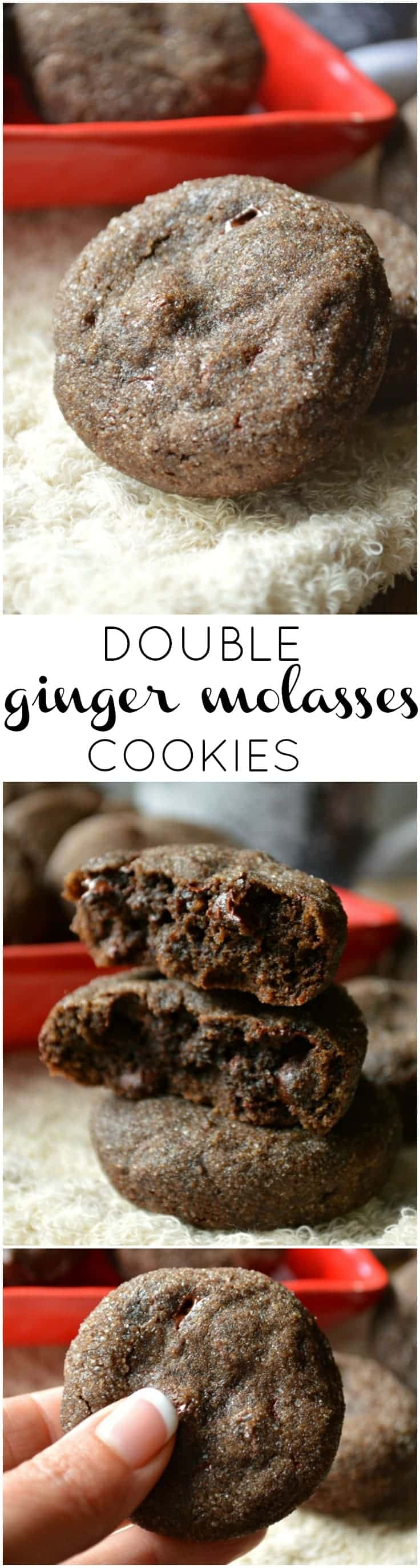 Double Ginger Molasses Cookies are soft and chewy, also studded with chocolate, rolled in sugar, and are ready to celebrate.